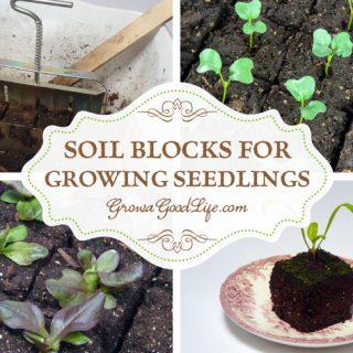Soil Blocks to Grow Seedlings