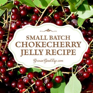 Small Batch Chokecherry Jelly from Foraged Fruit