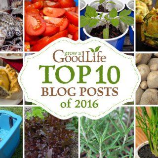 Grow a Good Life's Top 10 Posts of 2016