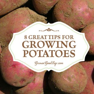 8 Great Tips for Growing Potatoes